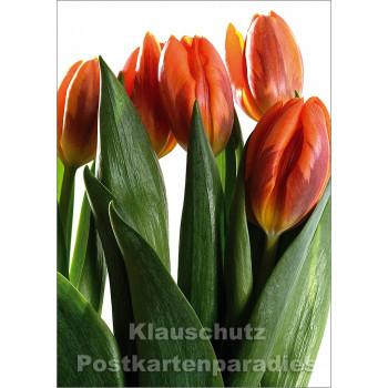 Blumen Postkarten Frühling Sparset - Motiv: Tulpenstrauß