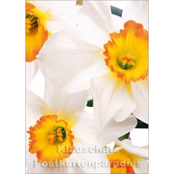 Blumen Postkarten Frühling Sparset - Motiv: Narzissen