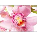 Blumen Postkarten Sparset - Motiv: orchidee