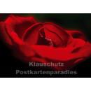 Blumen Postkarten Sparset - Motiv: Rose, rot