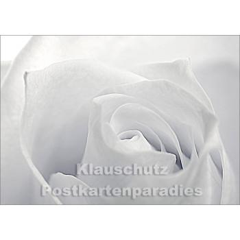 Blumen Postkarten Sparset - Motiv: Rose, weiß