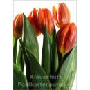 Blumen Postkarten Sparset - Motiv: Tulpen