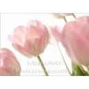 Blumen Postkarten Sparset - Motiv: Tulpen hell