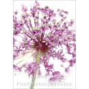 Blumen Postkarten Sparset - Motiv: Allium
