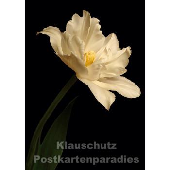 Blumen Postkarten Sparset - Motiv: Tulpe dunkel