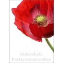 Blumen Postkarten Sparset - Motiv: Mohn, rot