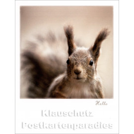 Polacard | Eichhörnchen