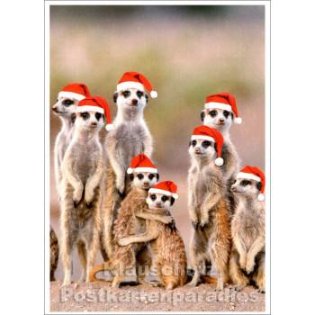 SkoKo Postkarte - Weihnachten bei Familie Erdmännchen