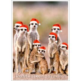 Postkarte - Weihnachten bei Familie Erdmännchen