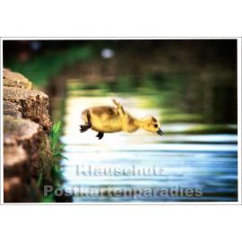 Lustige Tier Postkarte mit mutigem Entlein