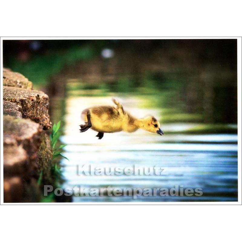 Lustige Tier Postkarte mit mutigem Entlein - Rannenberg Postkarten