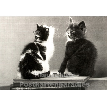 Neugierige Katzen - Foto Postkarte