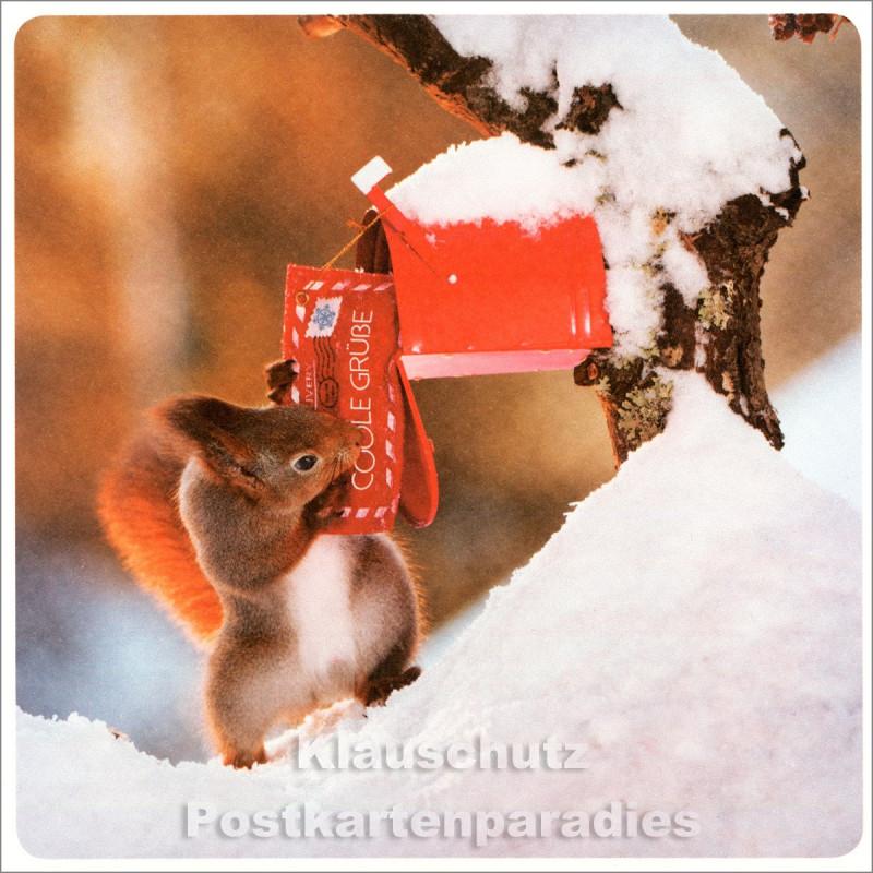 Quadrat Postkarte Weihnachten - Eichhörnchen - Grüße vom Nordpol