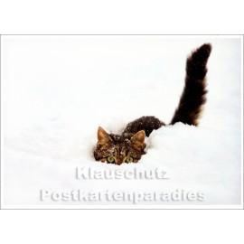 Katze im Schnee - Winter Postkarte