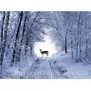 Postkartenbuch Winterwald von Rannenberg & Friends - Postkarte 01