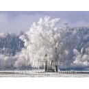 Postkartenbuch Winterwald von Rannenberg & Friends - Postkarte 02