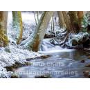 Postkartenbuch Winterwald von Rannenberg & Friends - Postkarte 03