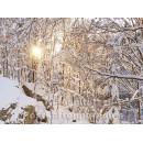 Postkartenbuch Winterwald von Rannenberg & Friends - Postkarte 05