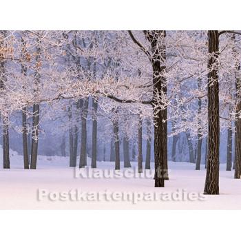 Postkartenbuch Winterwald von Rannenberg & Friends - Postkarte 07