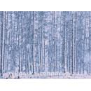 Postkartenbuch Winterwald von Rannenberg & Friends - Postkarte 08
