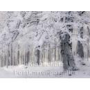 Postkartenbuch Winterwald von Rannenberg & Friends - Postkarte 09