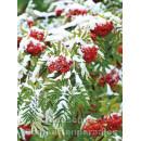 Postkartenbuch Winterwald von Rannenberg & Friends - Postkarte 13