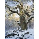 Postkartenbuch Winterwald von Rannenberg & Friends - Postkarte 15