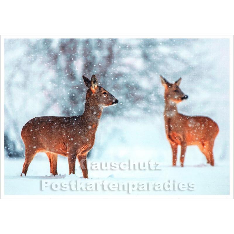 Winter Postkarte von Rannenberg & Friends | Rehe im Schnee