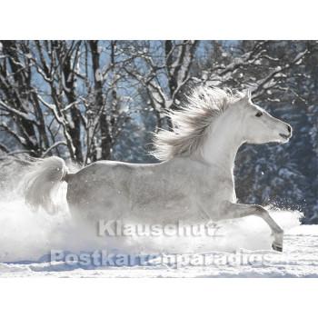 Pferde im Schnee - Postkartenbuch von Rannenberg & Friends - Postkarte 1