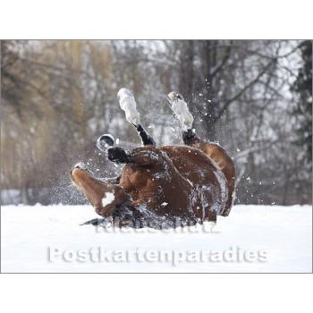 Pferde im Schnee - Postkartenbuch von Rannenberg & Friends - Postkarte 3