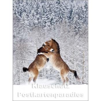 Pferde im Schnee - Postkartenbuch von Rannenberg & Friends - Postkarte 5