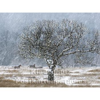 Pferde im Schnee - Postkartenbuch von Rannenberg & Friends - Postkarte 4