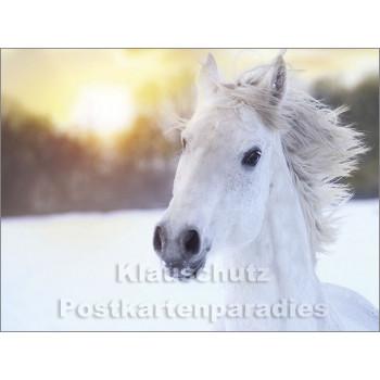 Pferde im Schnee - Postkartenbuch von Rannenberg & Friends - Postkarte 6