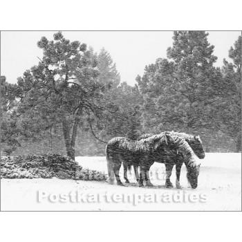Pferde im Schnee - Postkartenbuch von Rannenberg & Friends - Postkarte 7