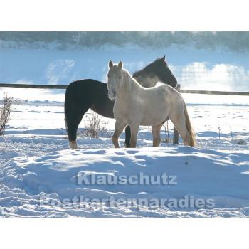Pferde im Schnee - Postkartenbuch von Rannenberg & Friends - Postkarte 8