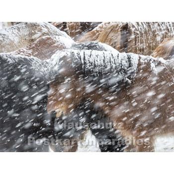Pferde im Schnee - Postkartenbuch von Rannenberg & Friends - Postkarte 9