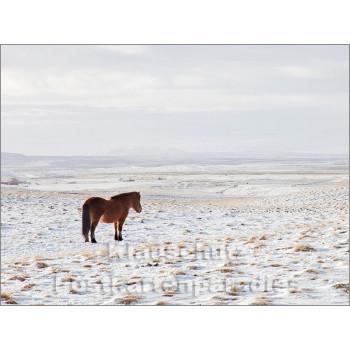 Pferde im Schnee - Postkartenbuch von Rannenberg & Friends - Postkarte 10