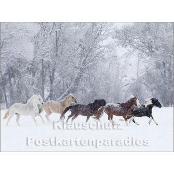 Pferde im Schnee - Postkartenbuch von Rannenberg & Friends - Postkarte 11