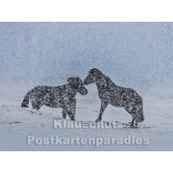 Pferde im Schnee - Postkartenbuch von Rannenberg & Friends - Postkarte 13