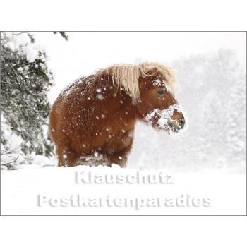 Pferde im Schnee - Postkartenbuch von Rannenberg & Friends - Postkarte 14