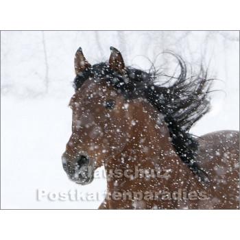Pferde im Schnee - Postkartenbuch von Rannenberg & Friends - Postkarte 15