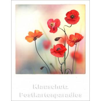 Taurus Polacard Postkarte | Blumen Mohn