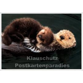 Kuschelzeit - SkoKo Tier Postkarte