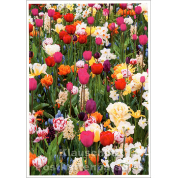 Frühlingsblumen - SkoKo Blumen Postkarte