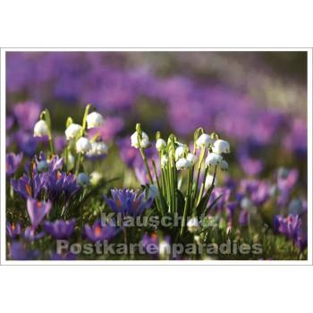 Rannenberg Blumen Postkarte |  Märzenbecher und Krokusse