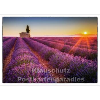 Postkartenparadies Postkarte: Lavendelfeld im Sommer in Frankreich