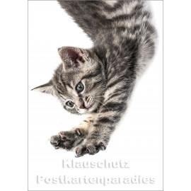 Postkartenparadies Foto Postkarte: Springende Katze