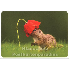 Lustige SkoKo Tier Postkarte | Hut der Saison