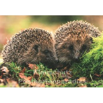 Igel im Herbst | Tier Postkarte von Taurus