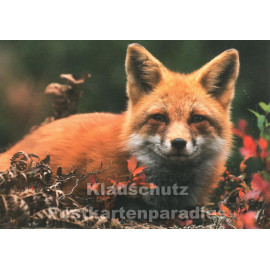Fuchs im Herbst | Tier Postkarte von Taurus